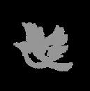 bird gray